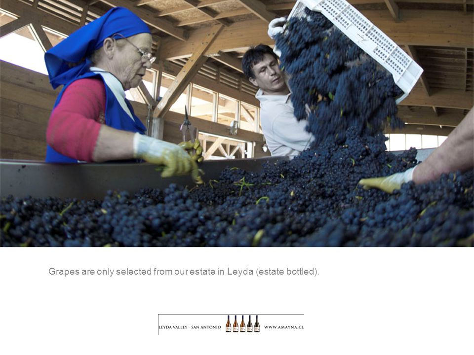 Grapes are only selected from our estate in Leyda (estate bottled).