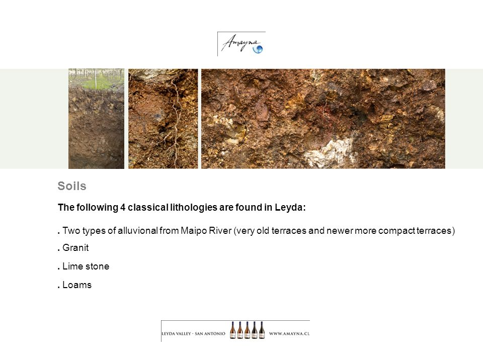 Soils The following 4 classical lithologies are found in Leyda:.