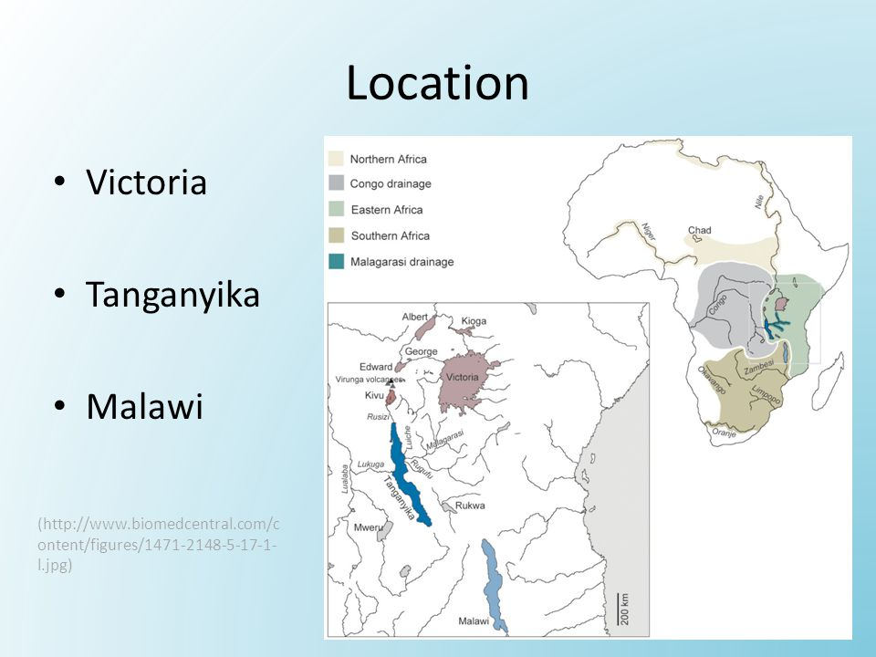 Location Victoria Tanganyika Malawi (http://www.biomedcentral.com/c ontent/figures/1471-2148-5-17-1- l.jpg)