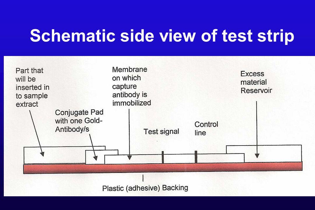 Schematic side view of test strip