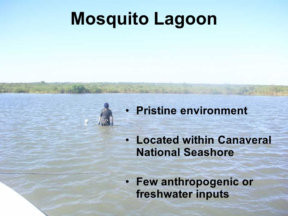 Mosquito Lagoon Pristine environment Located within Canaveral National Seashore Few anthropogenic or freshwater inputs