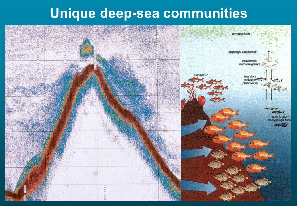 High biomass, highly aggregated commercial fishery potential