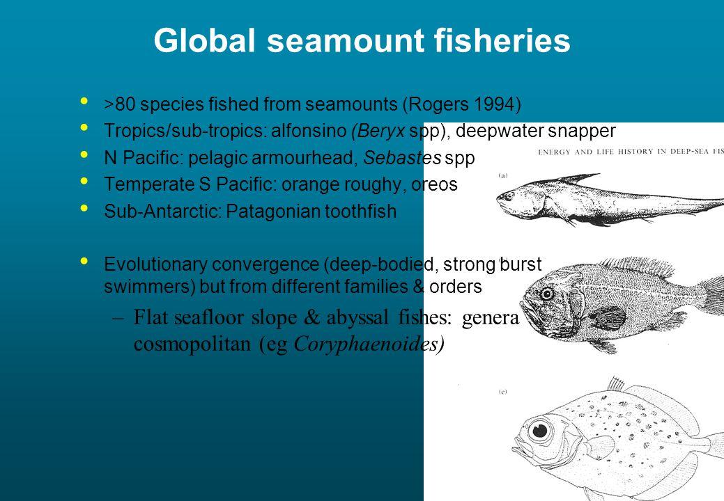 The unique hard-substrate seamount fauna