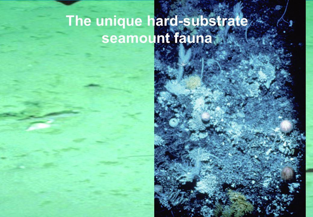 Soft-sediment v hard-substrate Deposit feeders dominant – Burrowing worms Suspension feeders dominant: –Hard & soft corals –Sponges –Hydroids, anemones –Crinoids –Brisingid starfish