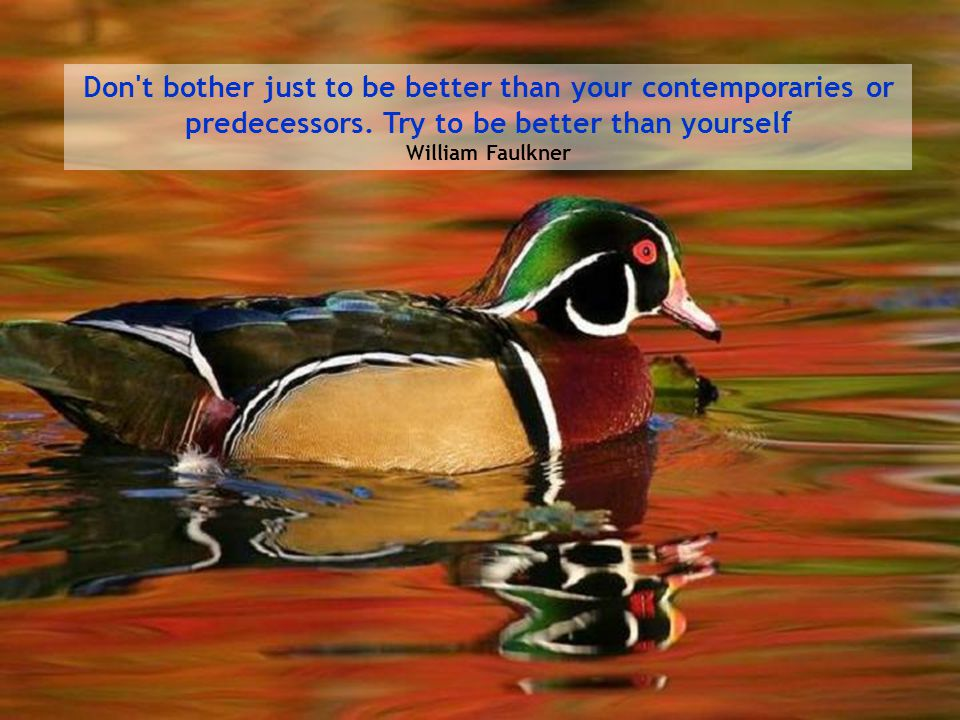 Don t bother just to be better than your contemporaries or predecessors.