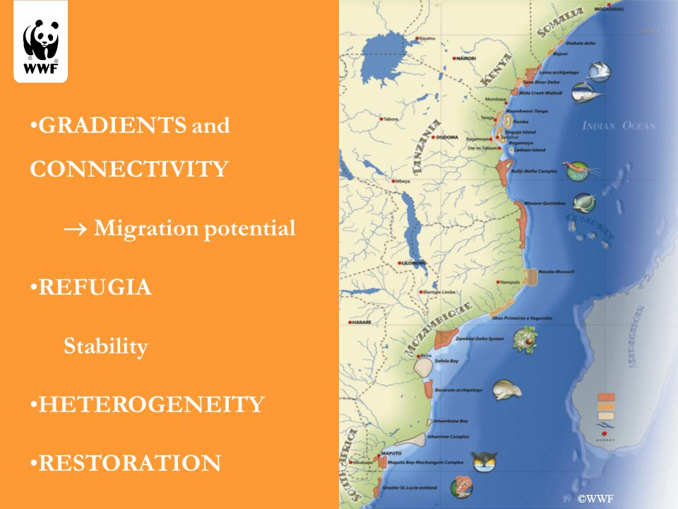 GRADIENTS and CONNECTIVITY  Migration potential REFUGIA Stability HETEROGENEITY RESTORATION ©WWF