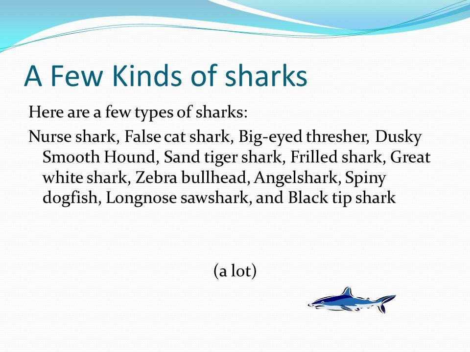 A Few Kinds of sharks Here are a few types of sharks: Nurse shark, False cat shark, Big-eyed thresher, Dusky Smooth Hound, Sand tiger shark, Frilled shark, Great white shark, Zebra bullhead, Angelshark, Spiny dogfish, Longnose sawshark, and Black tip shark (a lot)