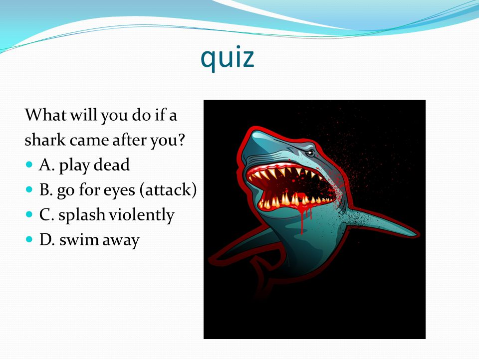 quiz What will you do if a shark came after you.A.