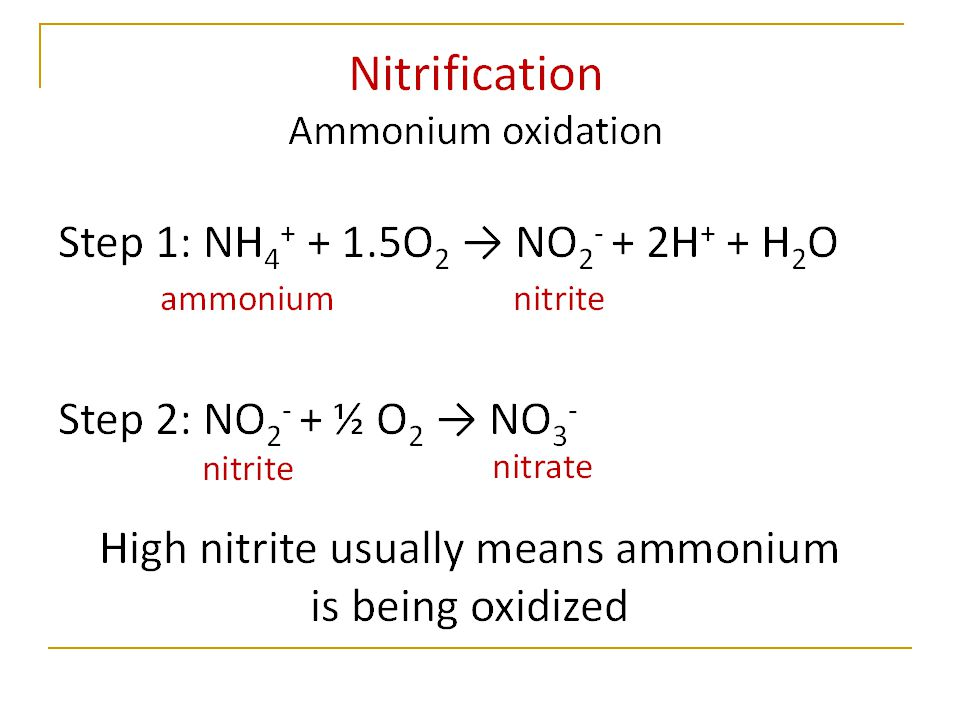 Decrease in NH 4 + due to nitrification Increase in NO 3 - due to nitrification Decrease in DIN due to assimilation Synoptic changes (different years)