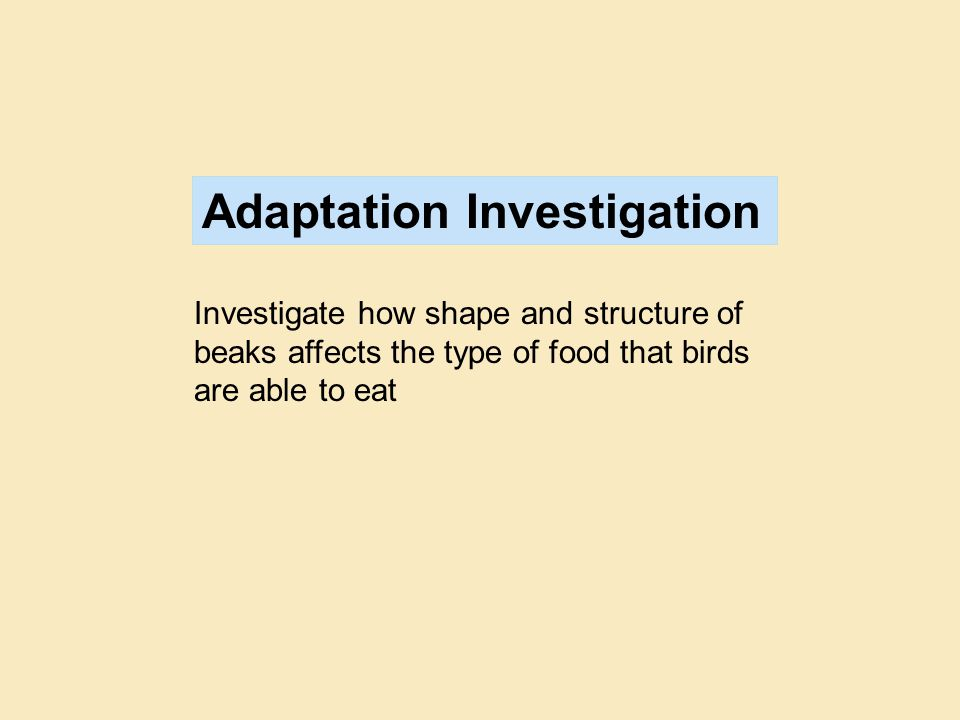 Adaptation Investigation Investigate how shape and structure of beaks affects the type of food that birds are able to eat