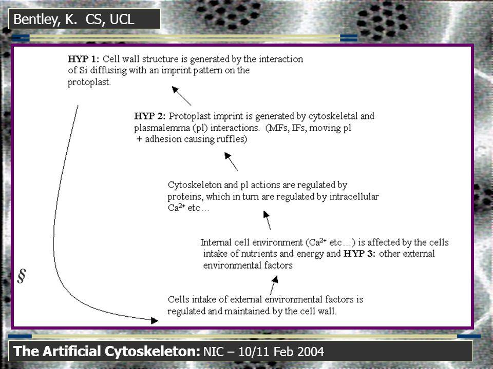 Bentley, K. CS, UCL The Artificial Cytoskeleton: NIC – 10/11 Feb 2004 
