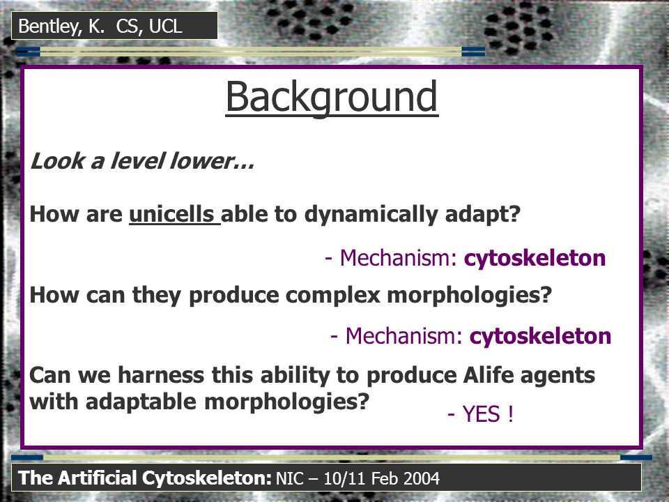 Background Look a level lower… How are unicells able to dynamically adapt.