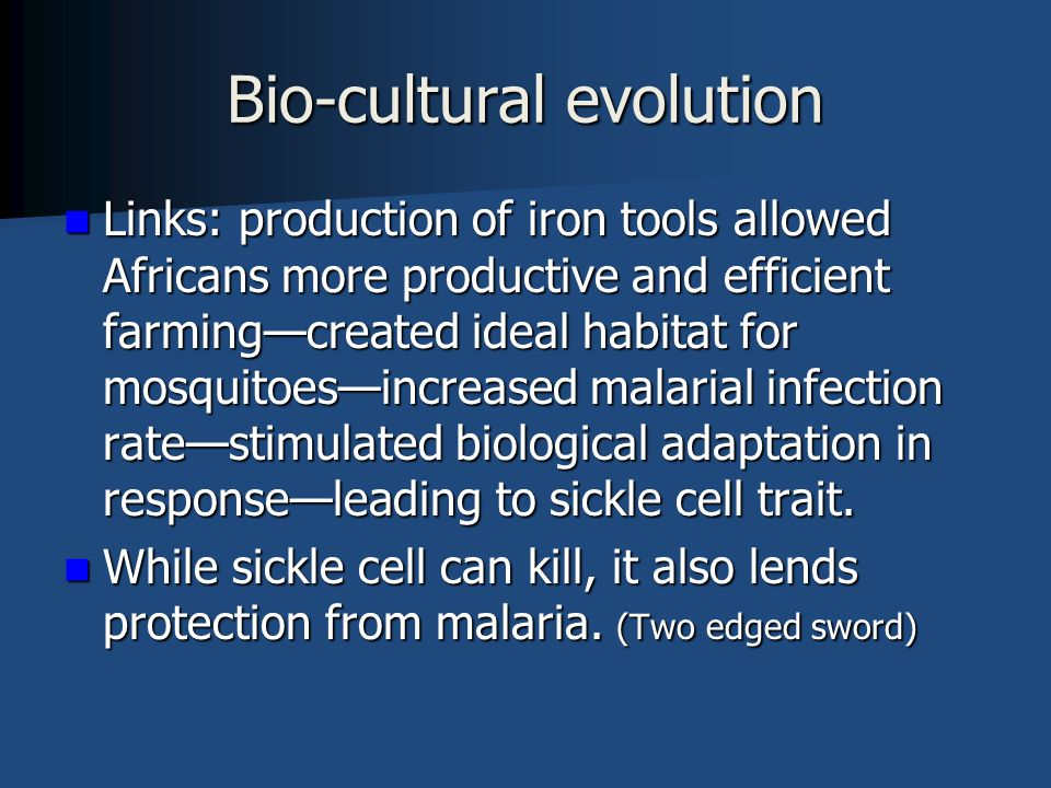Bio-cultural evolution Links: production of iron tools allowed Africans more productive and efficient farming—created ideal habitat for mosquitoes—increased malarial infection rate—stimulated biological adaptation in response—leading to sickle cell trait.