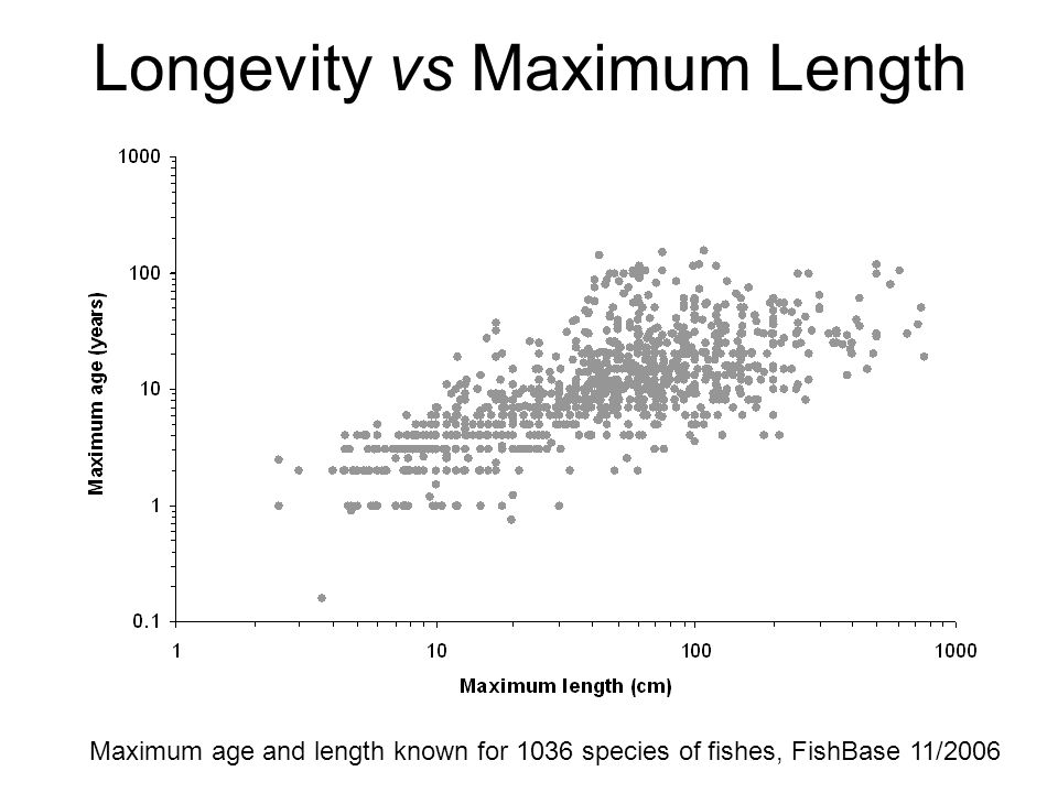 Longevity vs Maximum Length Maximum age and length known for 1036 species of fishes, FishBase 11/2006