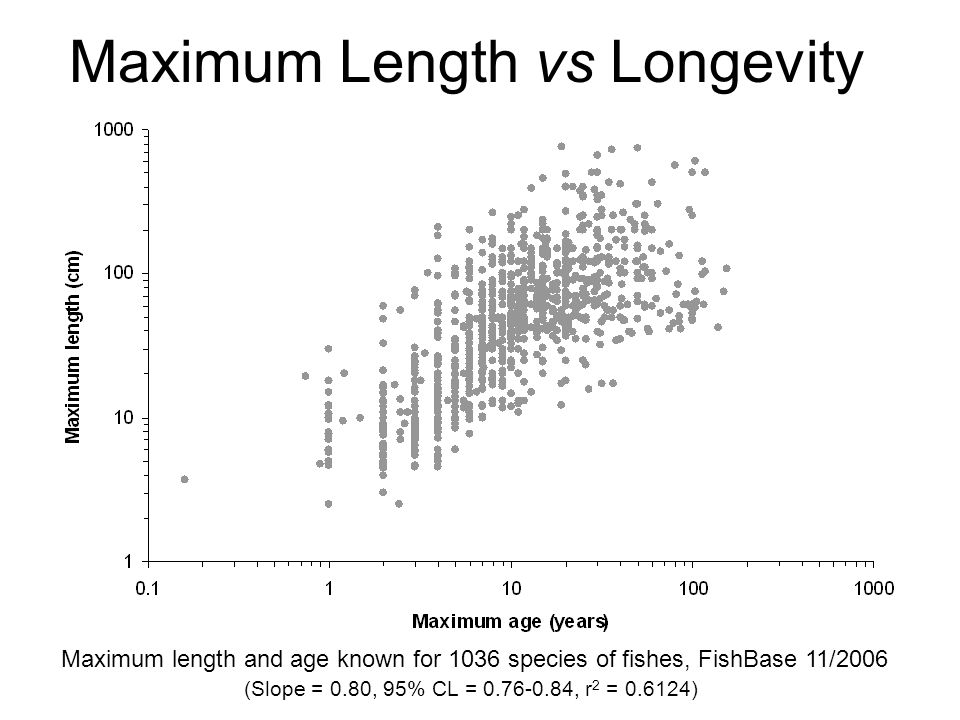 Maximum Length vs Longevity Maximum length and age known for 1036 species of fishes, FishBase 11/2006 (Slope = 0.80, 95% CL = 0.76-0.84, r 2 = 0.6124)