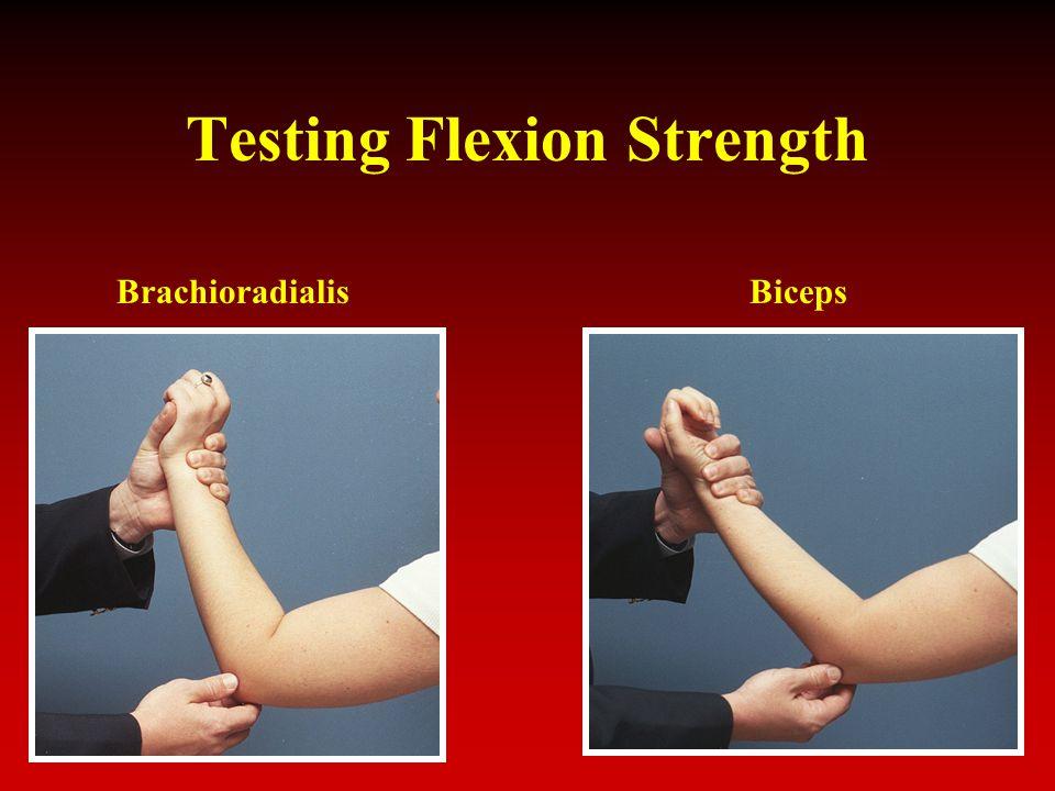 Testing Flexion Strength BrachioradialisBiceps