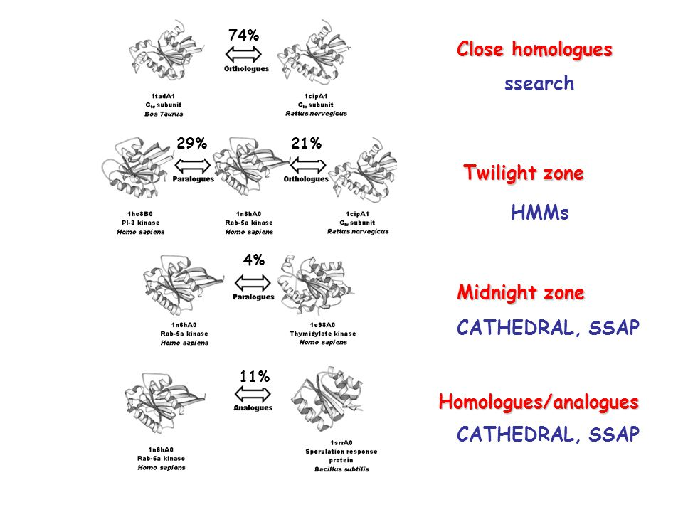 74% 29%21% 4% 11% Close homologues Twilight zone Midnight zone Homologues/analogues ssearch HMMs CATHEDRAL, SSAP