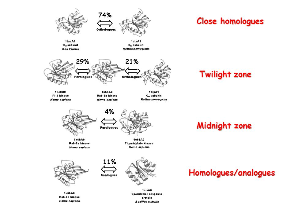 74% 29%21% 4% 11% Close homologues Twilight zone Midnight zone Homologues/analogues
