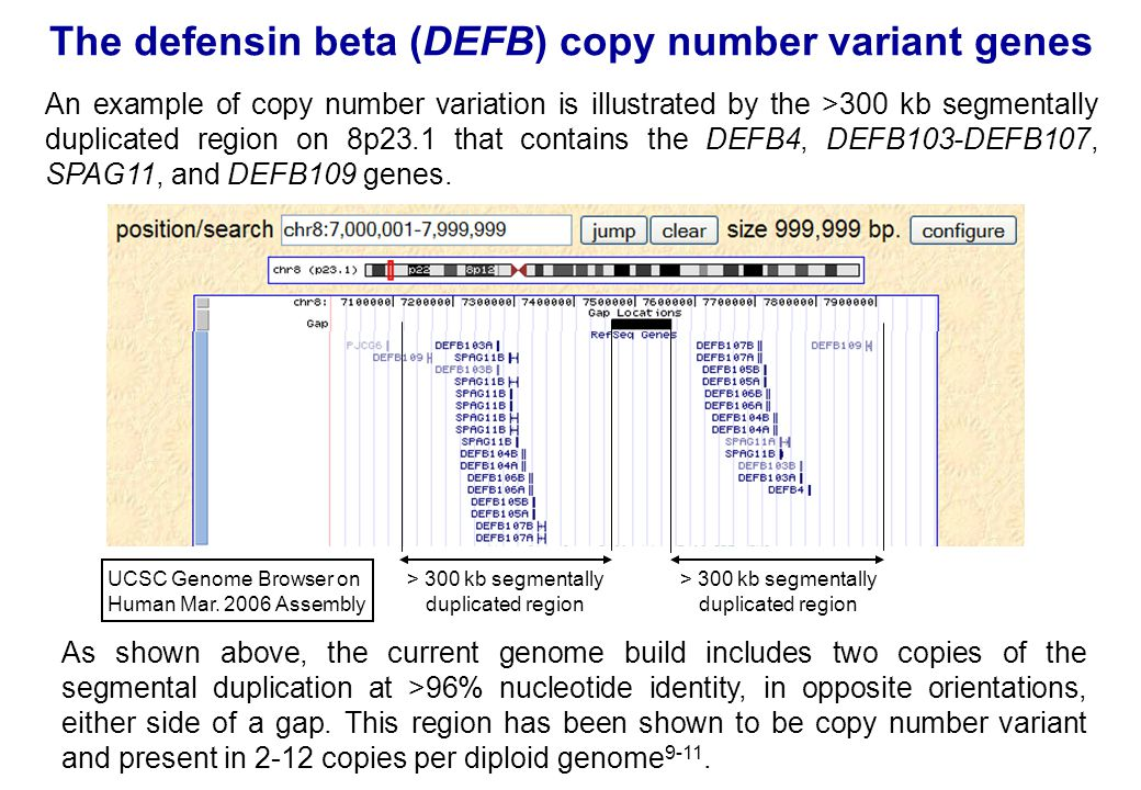 The defensin beta (DEFB) copy number variant genes An example of copy number variation is illustrated by the >300 kb segmentally duplicated region on