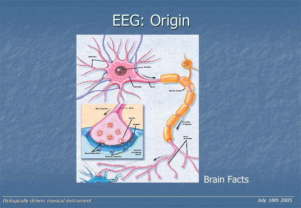 Biologically-driven musical instrument July 18th 2005 EEG: Origin Brain Facts