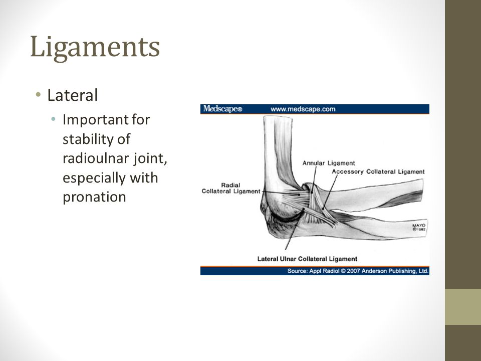 Ligaments Lateral Important for stability of radioulnar joint, especially with pronation
