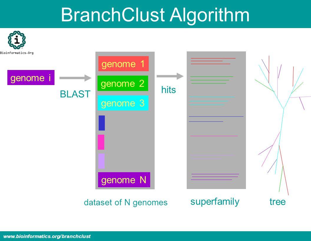BranchClust Algorithm www.bioinformatics.org/branchclust genome i genome 1 genome 2 genome 3 genome N dataset of N genomes superfamily tree BLAST hits
