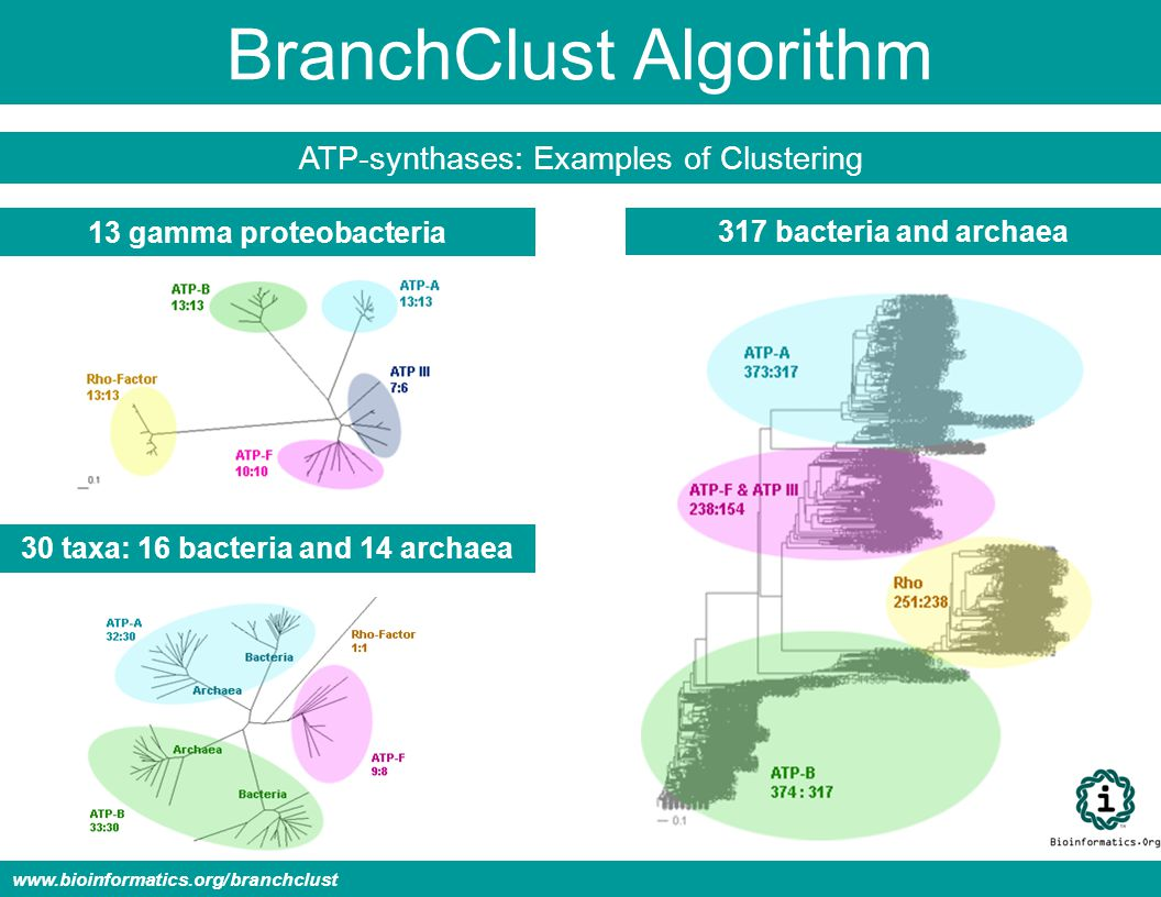 BranchClust Algorithm ATP-synthases: Examples of Clustering 13 gamma proteobacteria 30 taxa: 16 bacteria and 14 archaea 317 bacteria and archaea www.bioinformatics.org/branchclust