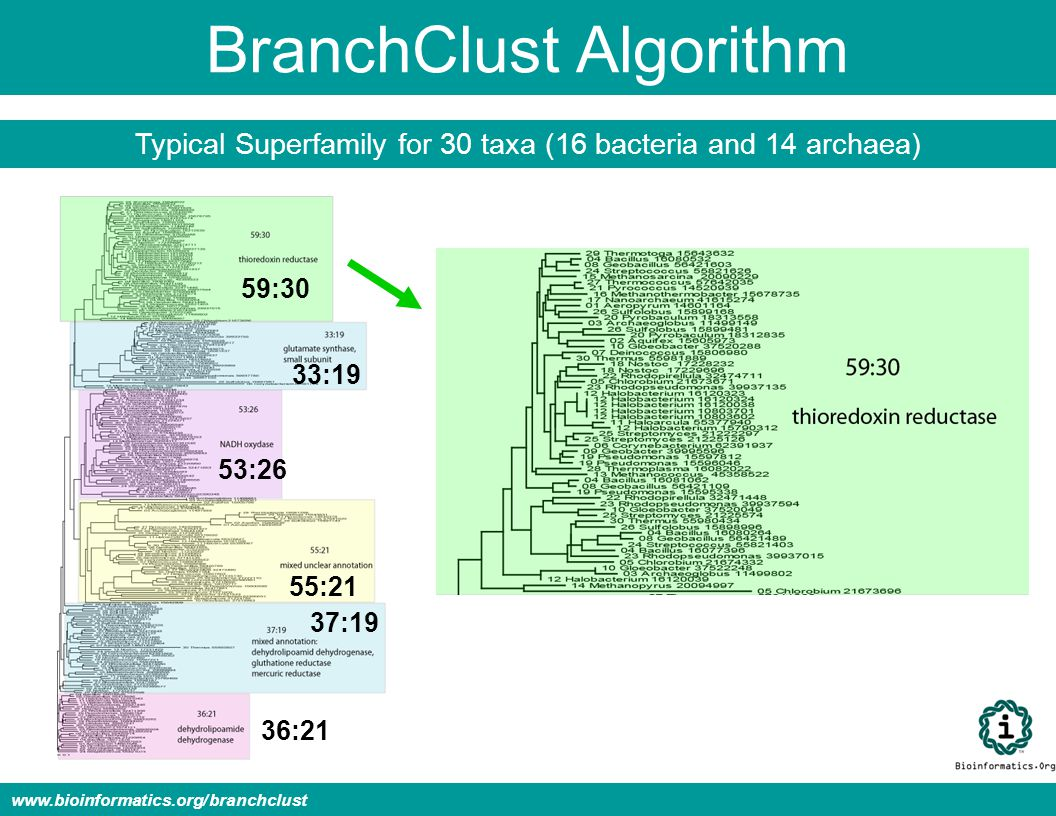 BranchClust Algorithm Typical Superfamily for 30 taxa (16 bacteria and 14 archaea) www.bioinformatics.org/branchclust 59:30 33:19 53:26 55:21 37:19 36:21