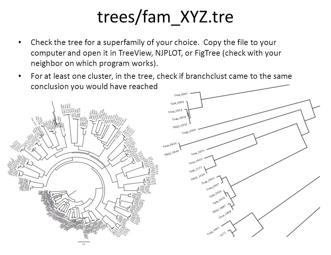 trees/fam_XYZ.tre Check the tree for a superfamily of your choice.