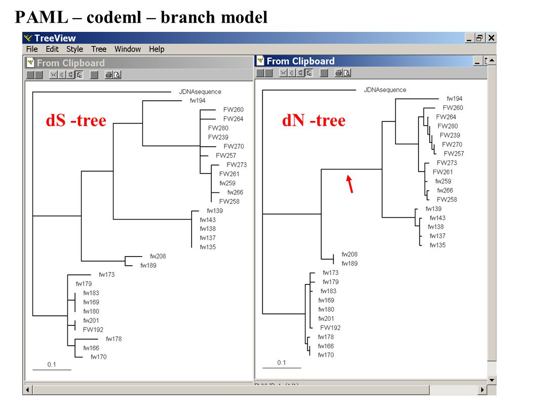 Split Decomposition tree from uncorrected P distances Splits Tree Representation Using all Quartets from all Gene Families that have more than 90% bootstrap support NJ tree from uncorrected P distances