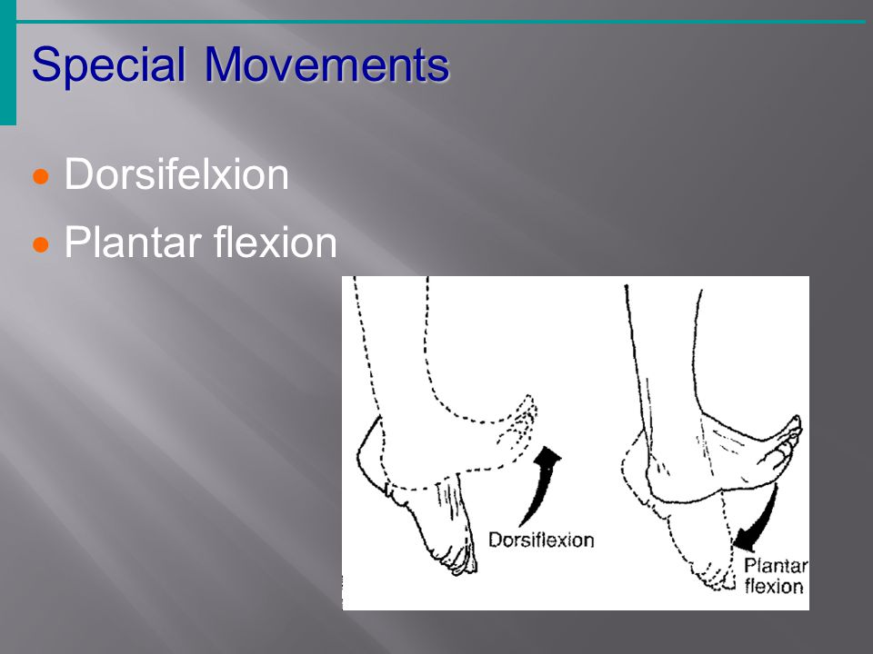  Dorsifelxion  Plantar flexion Special Movements