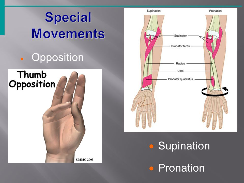 Opposition  Supination  Pronation