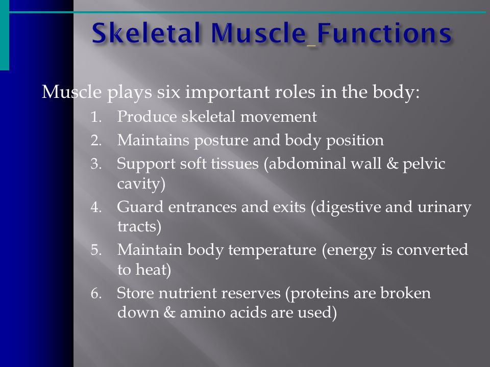 Muscle plays six important roles in the body: 1. Produce skeletal movement 2.