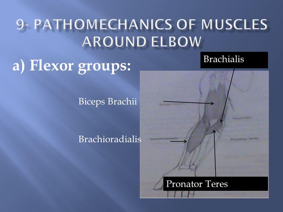a) Flexor groups: Biceps Brachii Brachioradialis Pronator Teres Brachialis