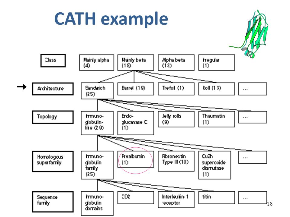 18 CATH example