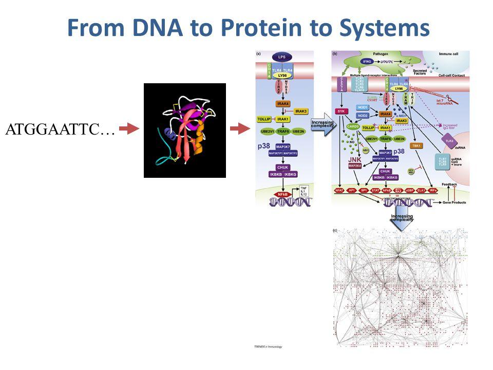 PSORT I prediction method: Rule based Nakai & Kanehisa, Proteins: Structure, Function, Genetics (1991)