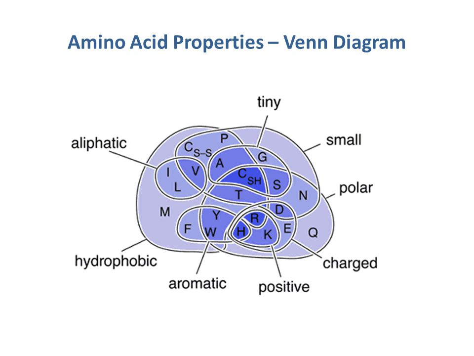 Amino Acid Properties – Venn Diagram