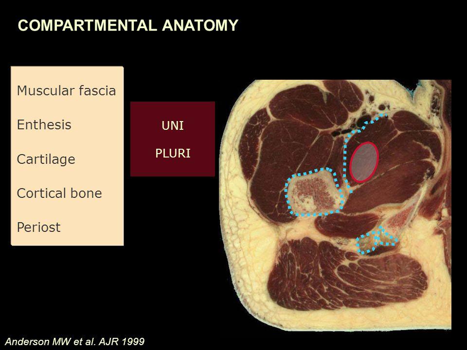Muscular fascia Enthesis Cartilage Cortical bone Periost Anderson MW et al.