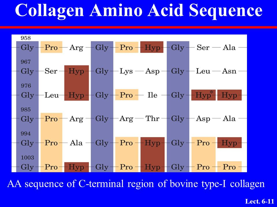 Lect. 6-10 Collagen Amino Acid Composition Nearly one residue out of three is Gly Proline content is unusually high Many modified amino acids present: