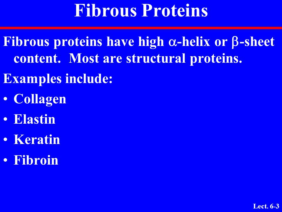 Lect. 6-2 Fibrous vs. Globular Proteins 1. Compact protein structureExtended protein structure 2. Soluble in water (or in lipid Insoluble in water (or