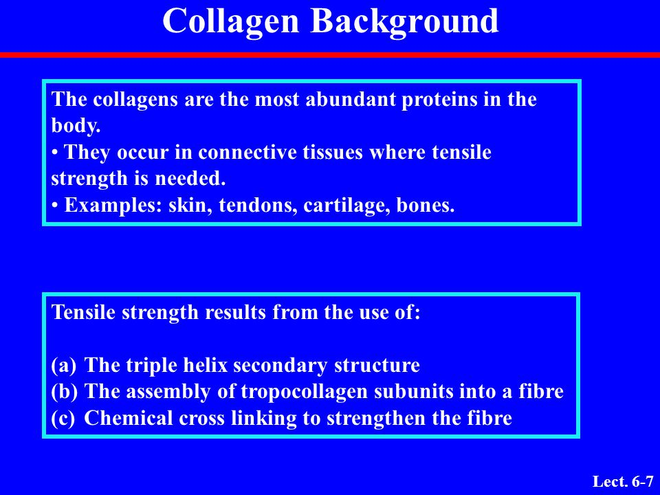 Lect. 6-6 Questions? 1. How would you define the structure of a collagen molecule? 2. What are the dimensions of a collagen molecule? 3. What are the