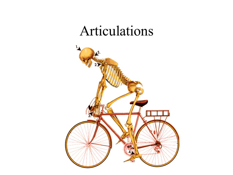 Articulations- points where two or more bones come together to form a joint [ maybe rigid or movable] Classified by Structure or Function Structure- based on material that joins bones together Fibrous – fibrous connective tissue Cartilagenous – hyaline or fibrocartilage Synovial – joint cavity with synovial membrane
