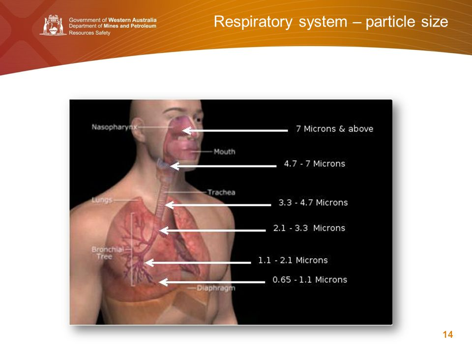 Respiratory system – particle size 14