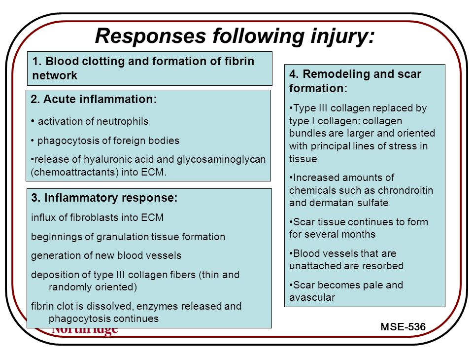 MSE-536 Responses following injury: 2.