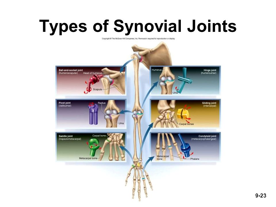 9-23 Types of Synovial Joints