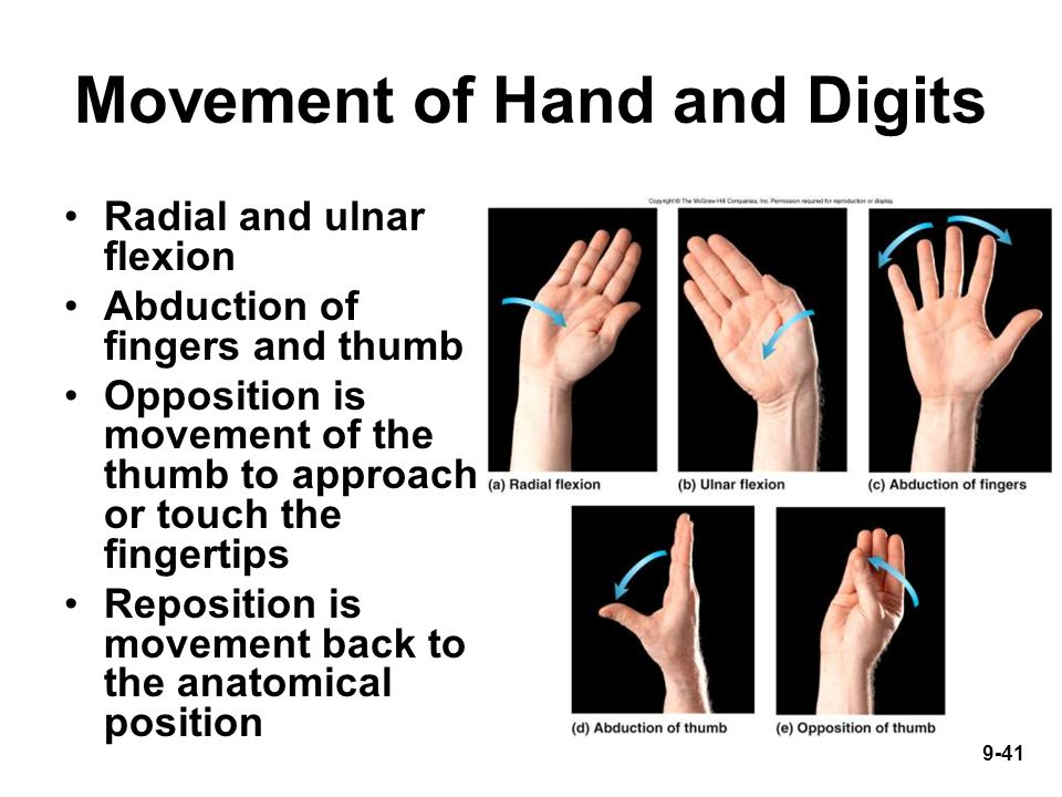 9-41 Movement of Hand and Digits Radial and ulnar flexion Abduction of fingers and thumb Opposition is movement of the thumb to approach or touch the fingertips Reposition is movement back to the anatomical position