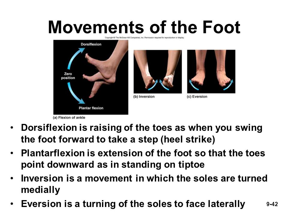 9-42 Movements of the Foot Dorsiflexion is raising of the toes as when you swing the foot forward to take a step (heel strike) Plantarflexion is extension of the foot so that the toes point downward as in standing on tiptoe Inversion is a movement in which the soles are turned medially Eversion is a turning of the soles to face laterally