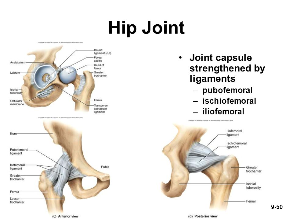 9-50 Hip Joint Joint capsule strengthened by ligaments –pubofemoral –ischiofemoral –iliofemoral