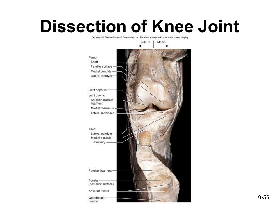 9-56 Dissection of Knee Joint