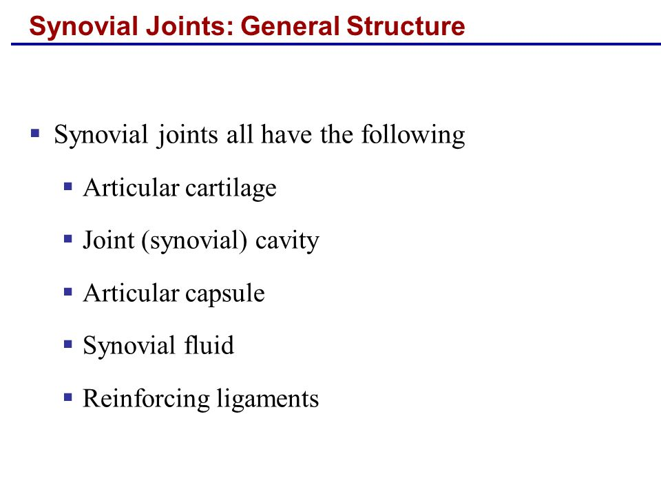 Synovial Joints: General Structure  Synovial joints all have the following  Articular cartilage  Joint (synovial) cavity  Articular capsule  Synovial fluid  Reinforcing ligaments